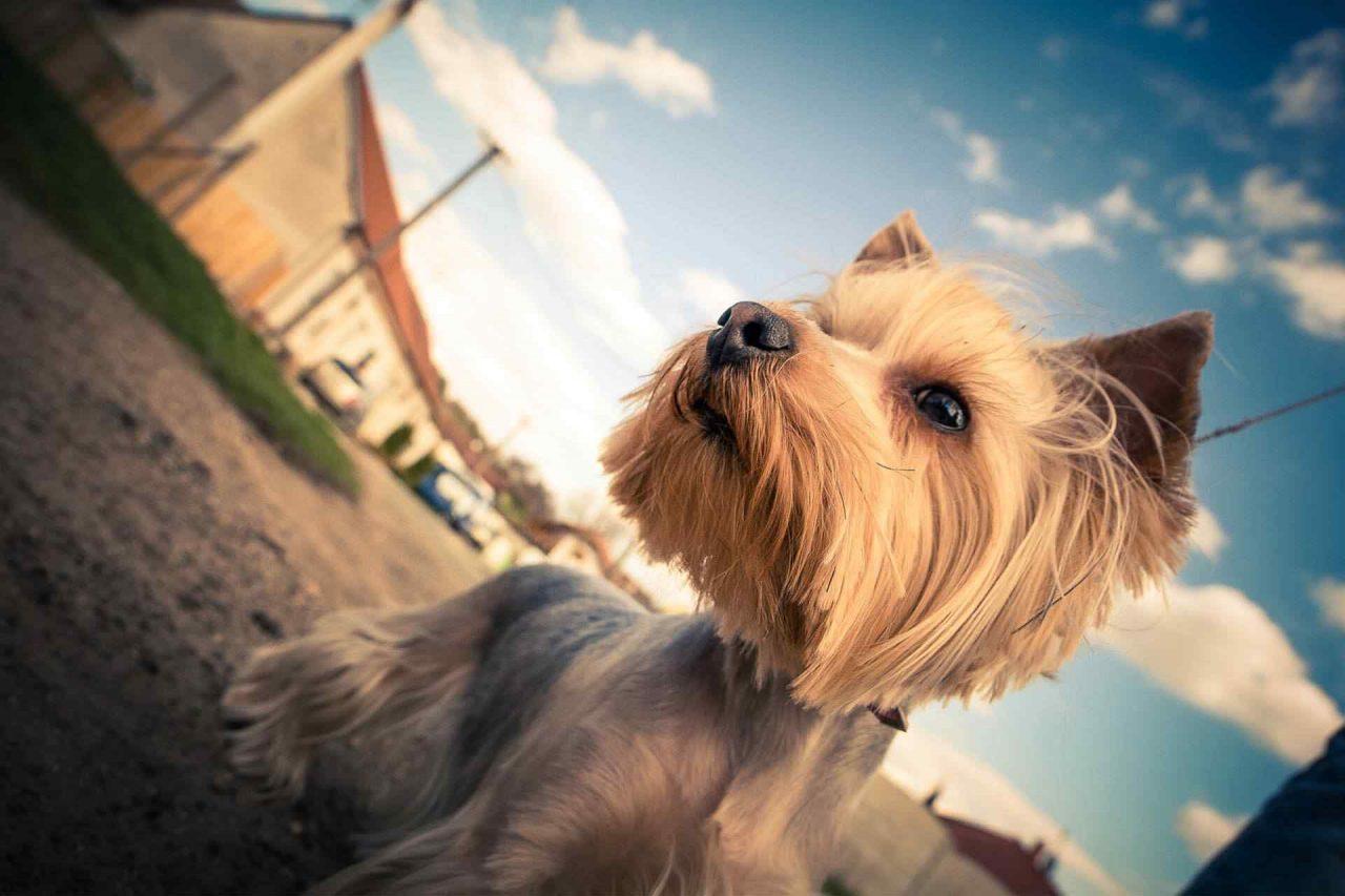 PETS dog5