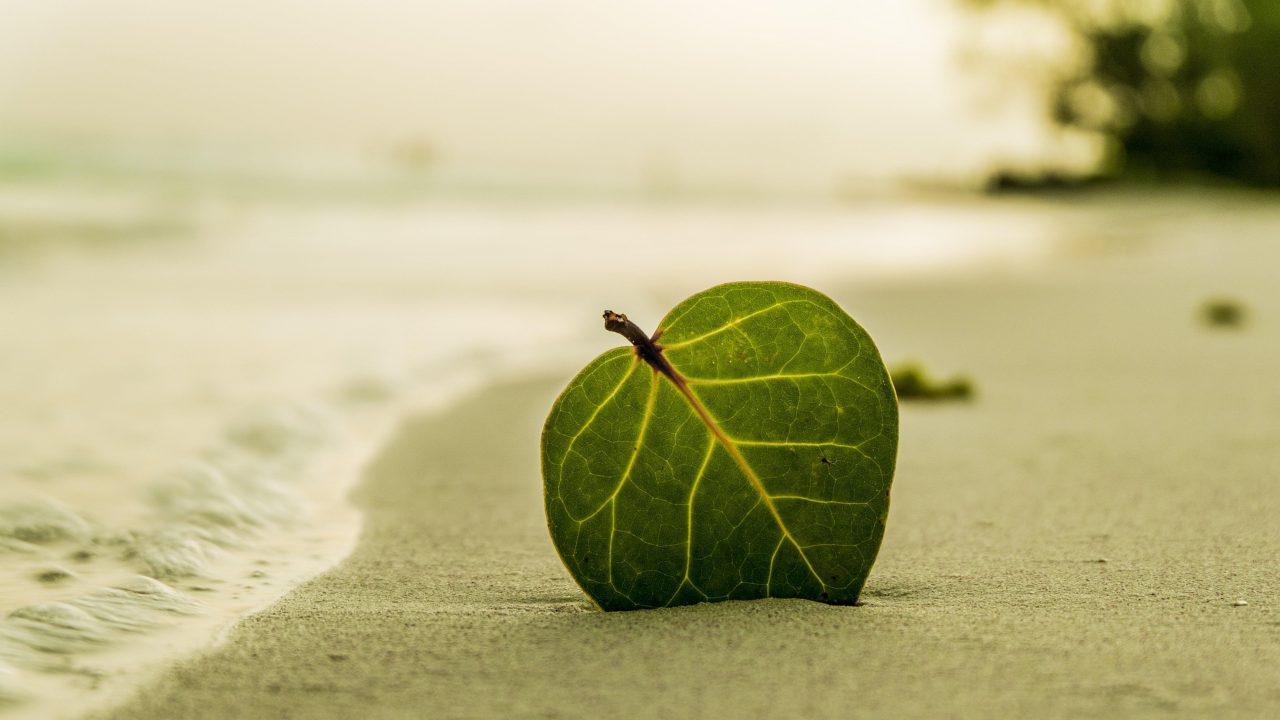 Co-Evolve-Beach-1-1280x720.jpg